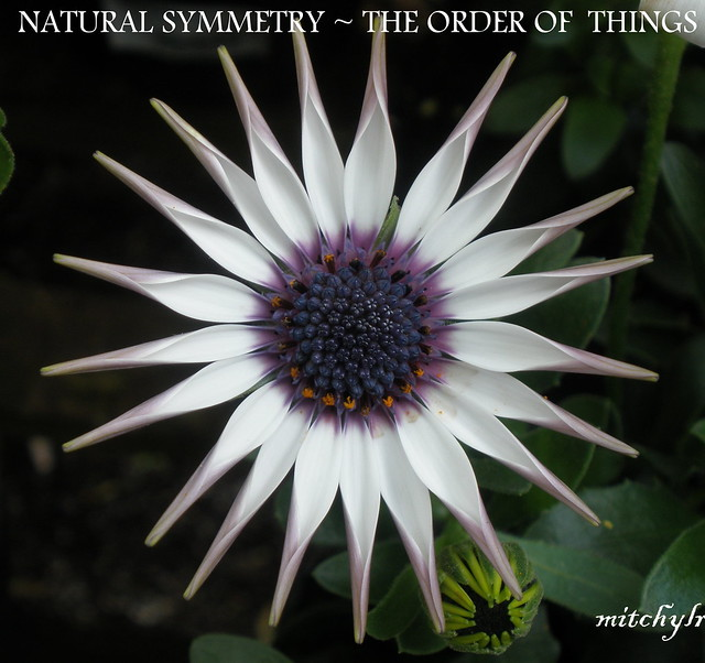 Natural Symmetry