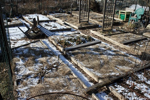 frozen garden plot 005