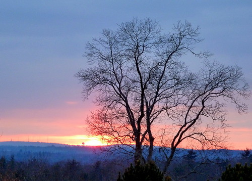 sunset towerhillbotanicgarden
