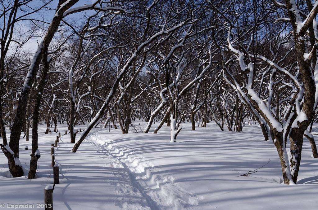 20130127 スノーシューコース