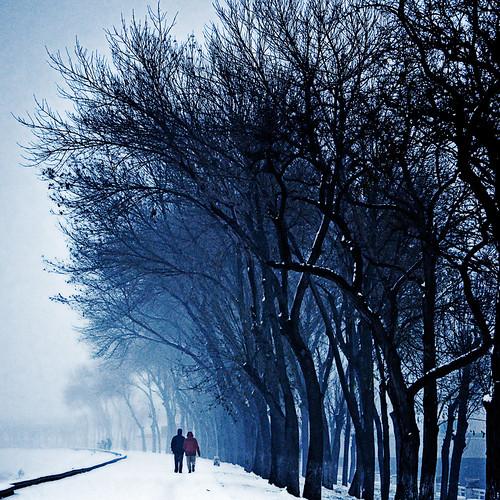 [フリー画像素材] 人物, カップル, 樹木, 並木道, 雪, 風景 - 中華人民共和国 ID:201302211200
