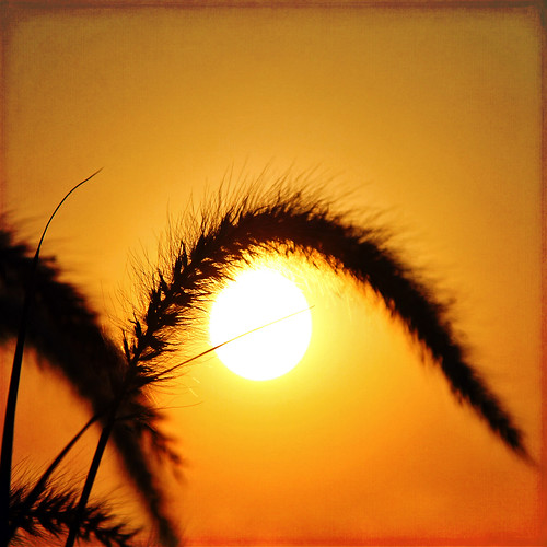 sun sunlight color macro texture nature grass sunrise reflections square golden bokeh 7d ie shining hss vividimagination artdigital trolled awardtree daarklands magicunicornverybest crazygeniuses exoticimage 1crzqbn sliderssunday netartii invisiblejetsandbreathings