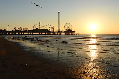 morning galveston beach wheel silhouette sunrise golden sand nikon texas seagull ferris hour rollercoaster nikkor