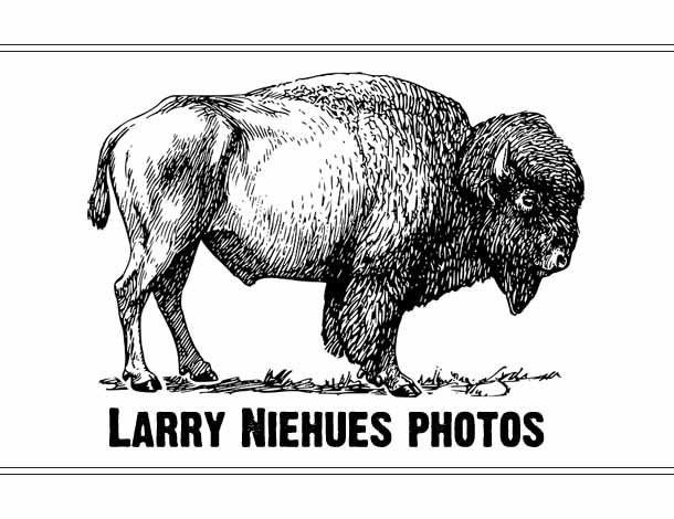 Larry Niehues Photos
