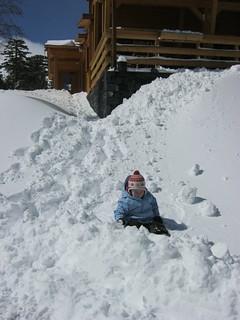 Clara in the fresh snow