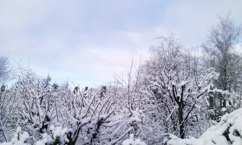 winter sky snow frost bushes