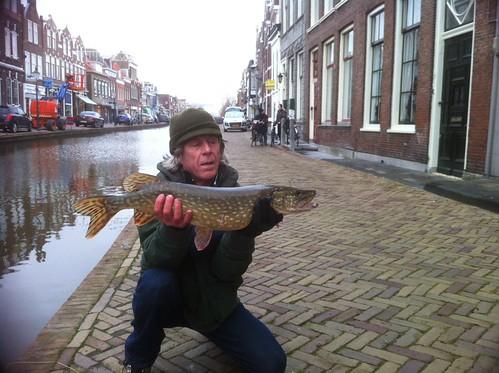 Snoek uit de kanalen van Maassluis