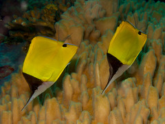 13.03.24 Bootless Bay Dives - Papua New Guinea