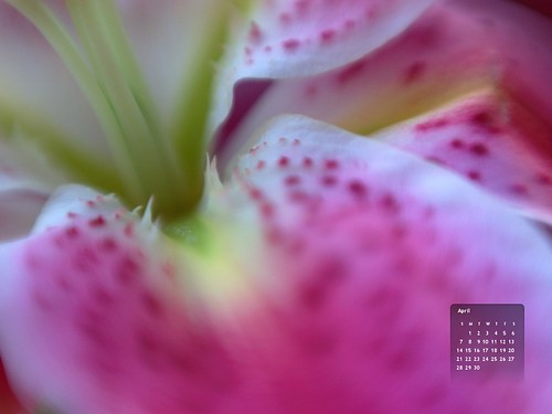 April 2013 Desktop Wallpaper by Gordon McKinlay