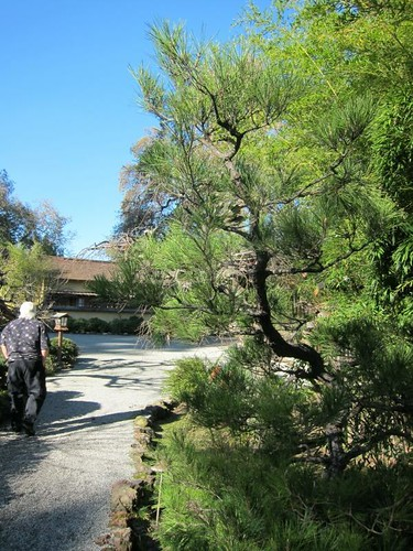 Hakone Japanese Gardens, Saratoga, CA, tree IMG_2274