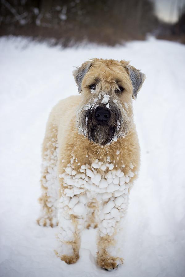snowyhobbes