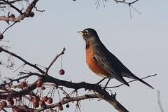 Wildlife -Birds