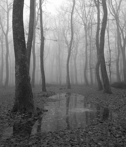 trees winter blackandwhite ice monochrome fog forest puddle blackwhite woods smartphone android 2012 twop htc onex winter2012 htconex