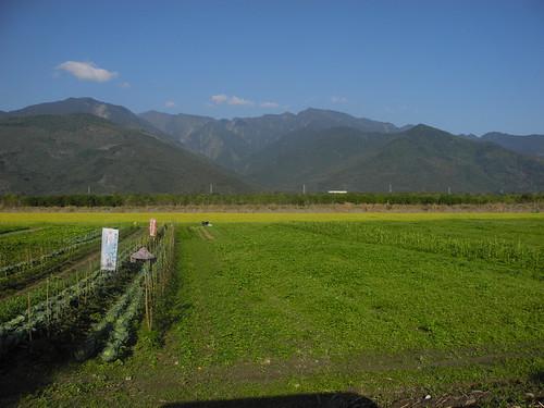 海岸山脈下的里拔哈農場。