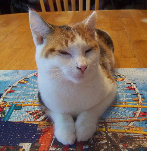 Snoozing kitty on a puzzle