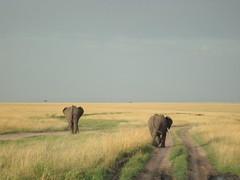 Safari Elephant Trekking