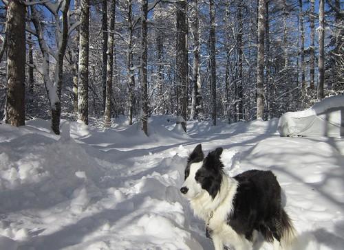ランディと昨夜の大雪 2013年2月13日8:46 by Poran111
