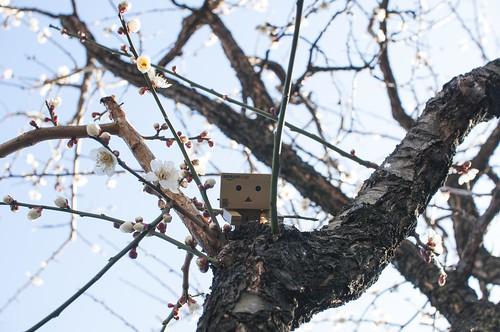 梅の木とダンボー