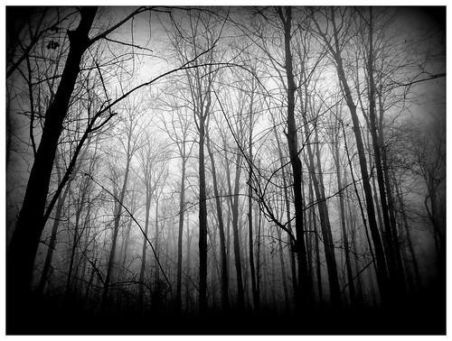 Spooky Trees   Posted via email from Image Blog   Glynne ...