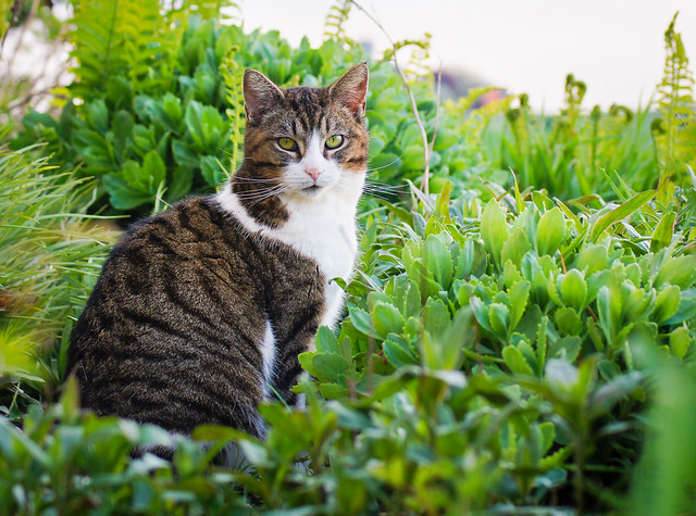 Cat, Kitty, Garden