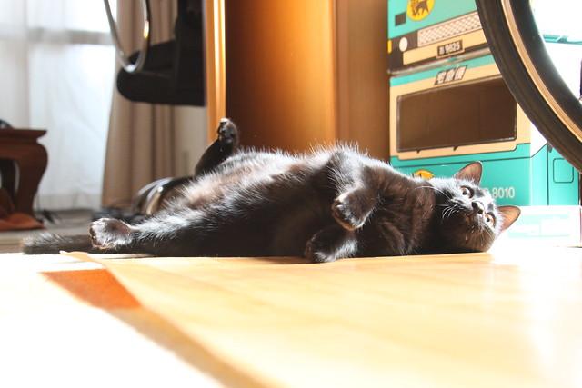 黒猫の開き