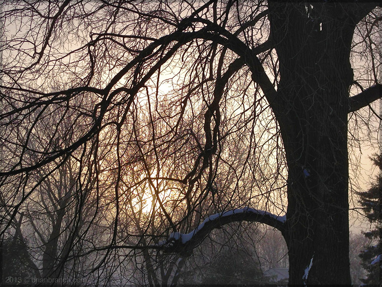 IMG_1055_broadway_tree