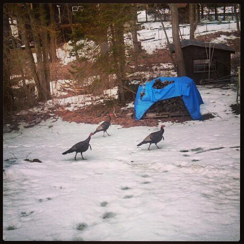 Backyard visitors.