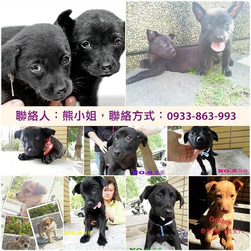 「認養推」北市北投區網友TNR計畫,救援的犬隻,已做過基本檢查,歡迎認養和加入志工陣容與資助,謝謝大家~20130306