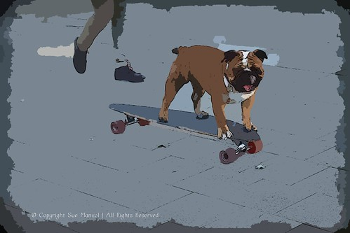 Philly skate dog