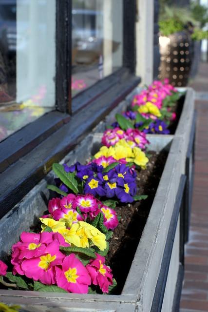 Flores - Old Bellevue