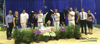 30 juillet 2016 - Championne Junior: MABEL CONTRAST ALEXI - Ferme Maguy Normandin inc. et Ferme Mynavia Championne Junior de Réserve: COMESTAR LAUTASHA DOORMAN- Comestar Holstein, Ferme Tresy inc. et Robin & Diane Gilbert Mention Honorable Junior: MABEL DOORMAN DIVOU- Ferme Maguy Normandin inc.