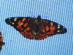 The Indiana State Fair's  butterfly enclosure.