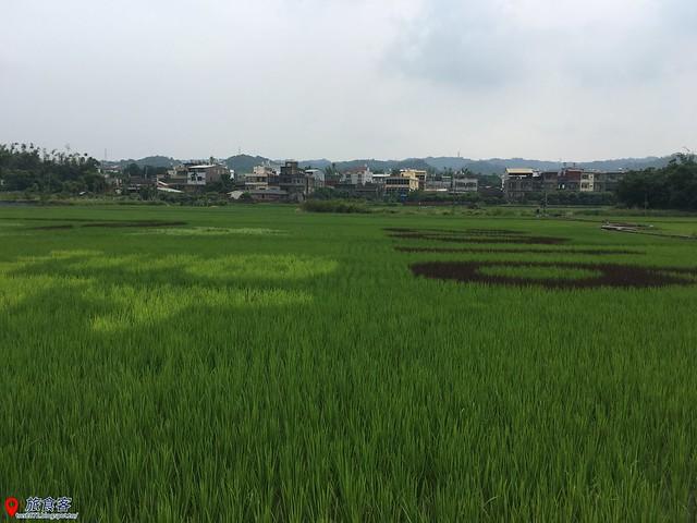 花壇彩繪稻田_040