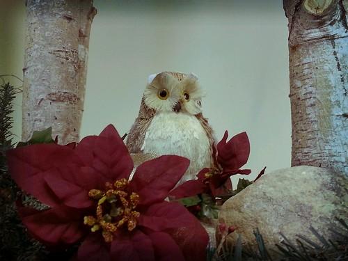 20130106 - Owl is well