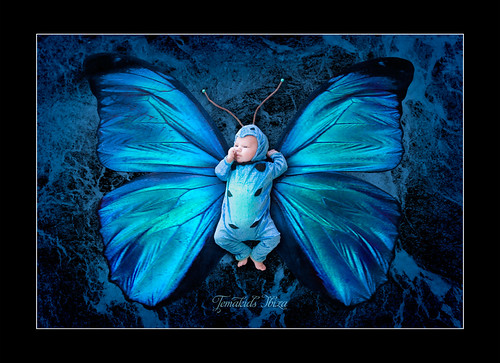 image1-baby-jack-as-blue-morpho-butterfly Themakids Ibiza