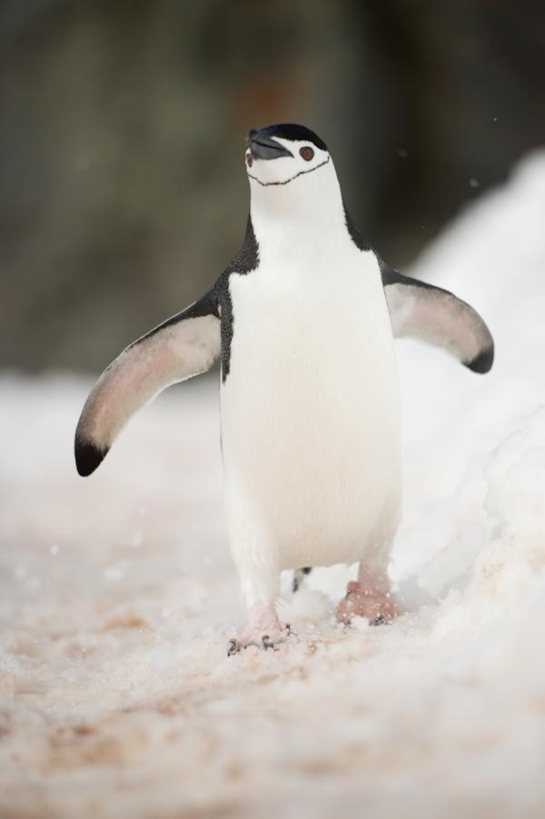 RYALE_Antarctica_Penguins-21