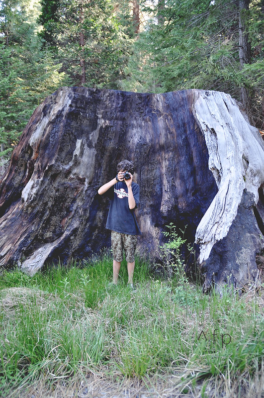 Sequoia 221AA