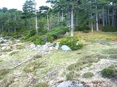 Boucle de la bergerie de Biancarellu : les deux bergeries