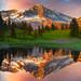 Mount Rainier Wildflower Season by kevin mcneal