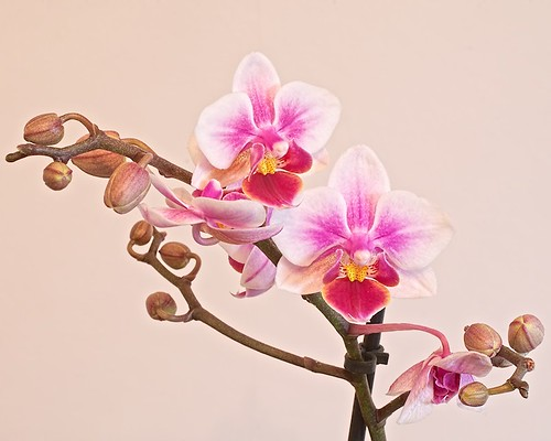 Orchid: Photo Stacking Example