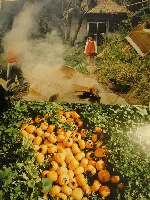 15 秋天,满地的柿子