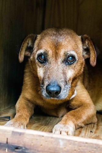 Doença de Parkinson em cães - Petlove - O Maior Petshop Online do Brasil