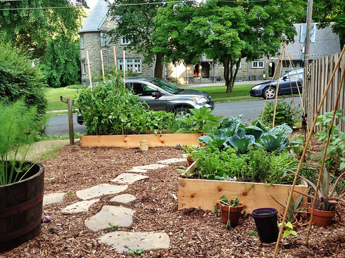 backyard vegetable garden (by: Nate Swart Photo, creative commons)