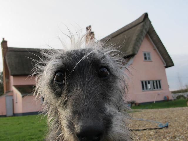 Lyra the dog