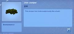Just Juniper
