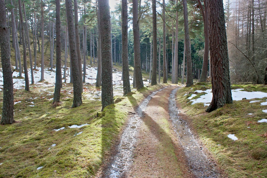 Woods above Invercauld