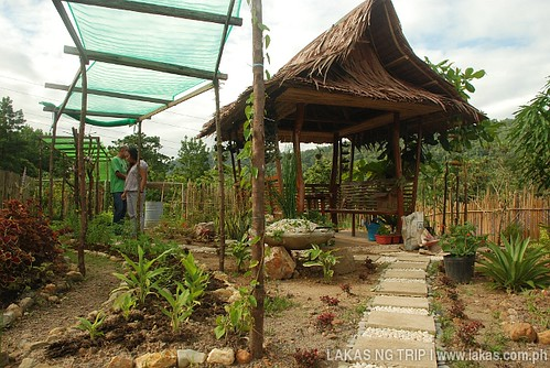 Medicinal Garden of Northern Palawan Provincial Hospital in Taytay, Palawan
