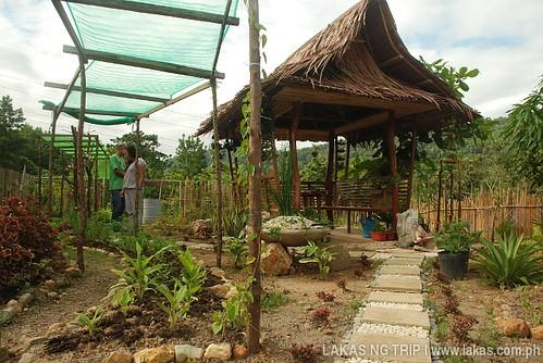 Medicinal Garden of Northern Palawan Provincial Hospital in Taytay, Palawan
