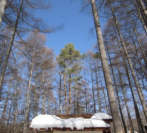 屋根の雪も大分融けてきました 2013.3.9 by Poran111