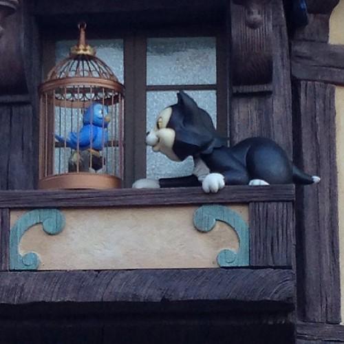 フィガロが起きた!ブルースカイセラーの資料とは若干動きが違うな…。
